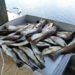 Calcasieu Hot Spots Fishing Charters | Charted Fishing Tours on Lake Calcasieu LA | 337-526-5282